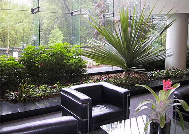 Plantas para oficina plantas for Plantas decorativas para oficina