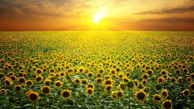 Plantas para sol plantas - Plantas que aguanten el sol ...