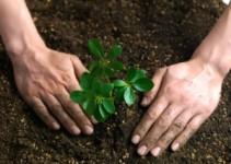 como-curar-la-diabetes-con-plantas-medicinales
