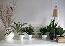 cuidado-plantas-interior