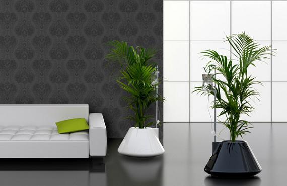 Plantas para casas plantas for Decoracion de casas con plantas de interior