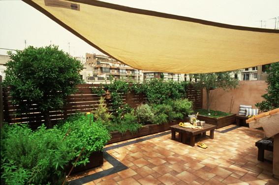 Plantas para terrazas plantas - Plantas para terraza con mucho sol ...