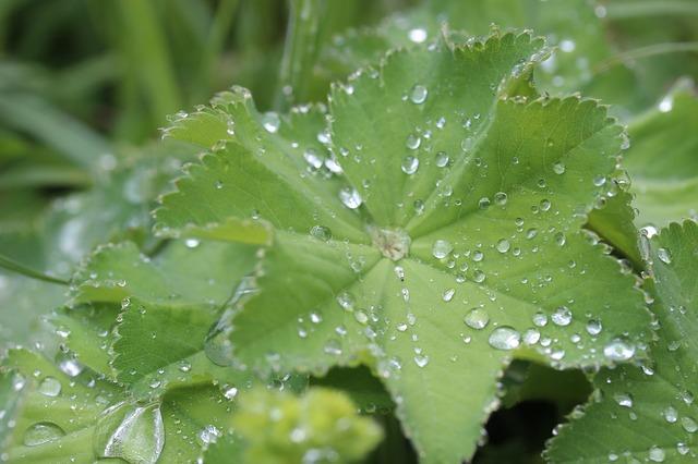 plantas curativas y para que sirven_