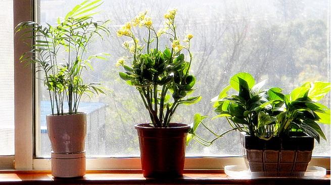 plantas-depuradoras-para-el-hogar