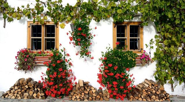 plantas para balcon