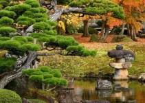 plantas para un jardin