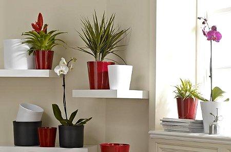 Plantas para sala plantas for Decoracion de casas con plantas naturales