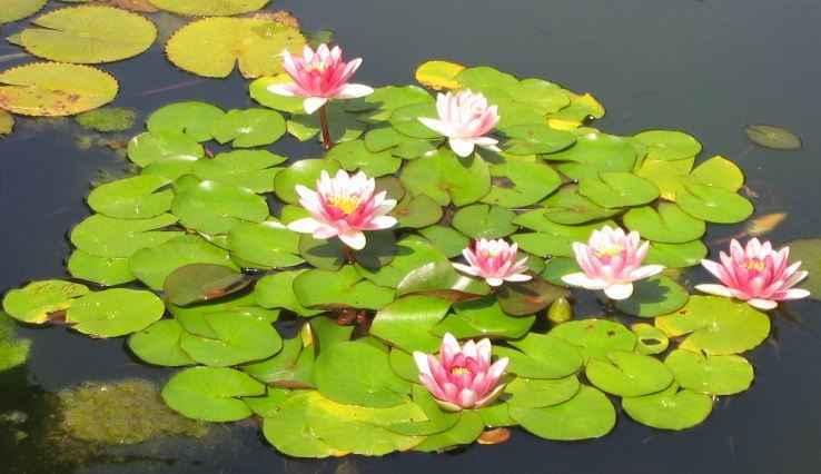C mo son las plantas marinas y c mo sobreviven plantas - Cuales son las plantas con flores ...