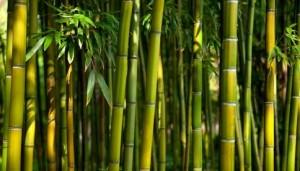 Decora tu ba o con una planta de bamb plantas - Bambu planta exterior ...