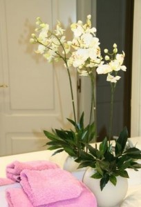 Orquidea decoracion