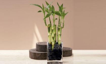 Decora tu ba o con una planta de bamb plantas for Adornos para plantas con llantas
