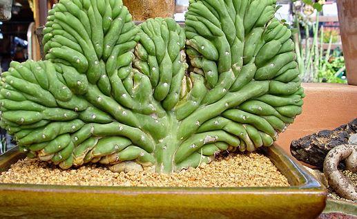 Plantas crasas cuidado y reproducci n plantas - Tipos de plantas y sus cuidados ...