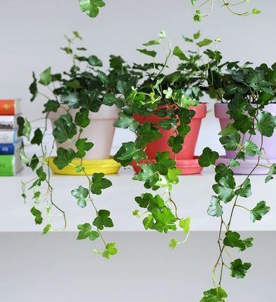 Plantas para casas estas son las mejores plantas de interior para limpiar el aire de casa - Plantas interiores ...