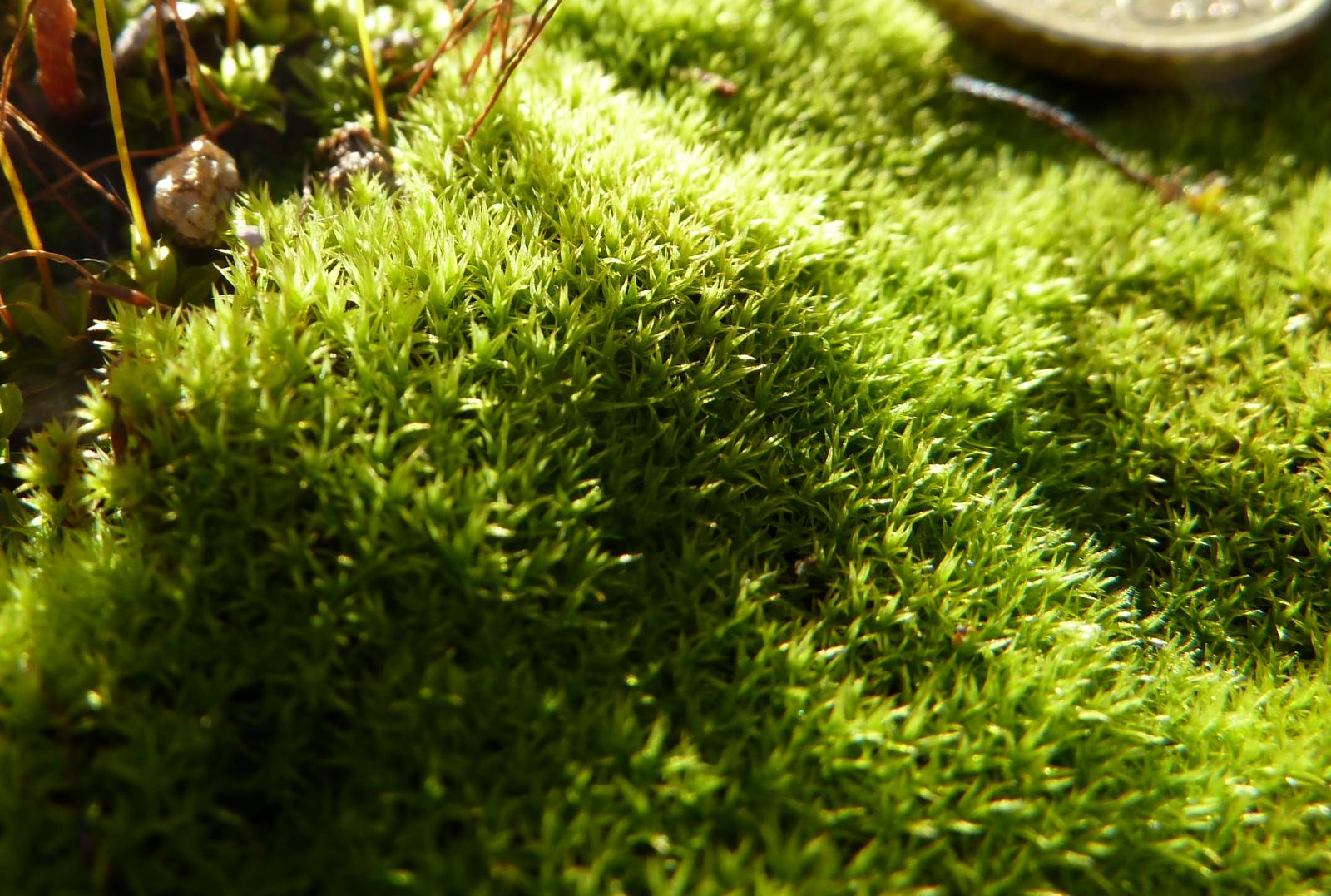 Los musgos, un gran sostén para los ecosistemas - Plantas
