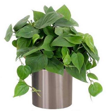 Plantas para interiores de casas plantas - Ver plantas de interior ...