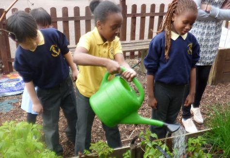 plantas con niños