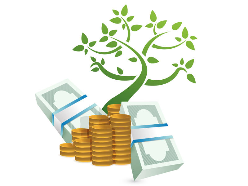 5 Plantas Para Atraer El Dinero Plantas Para Com