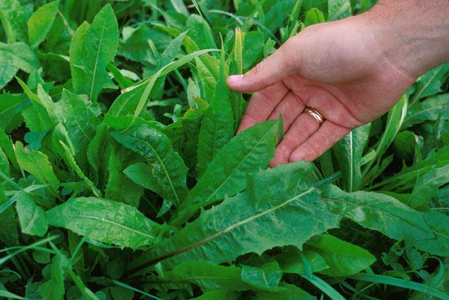plantas para diabetes