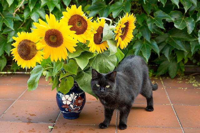 Plantas para gatos dom sticos plantas Plantas seguras para gatos