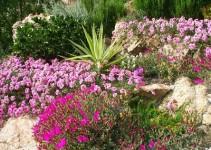 plantas para jardines pequeños