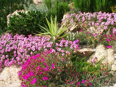 Plantas para jardines peque os plantas - Suelos para jardines pequenos ...