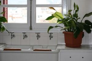 plantas para la cocina