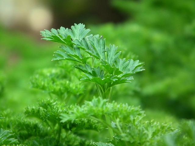 plantas para los riñones