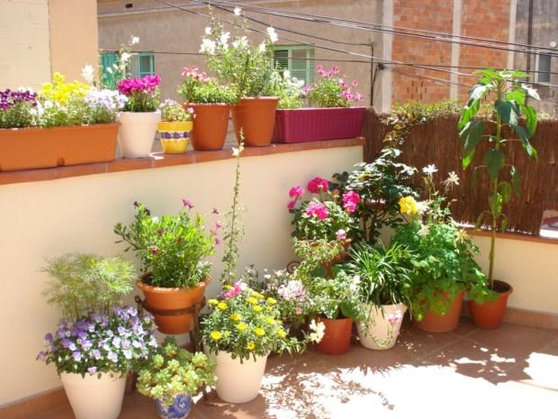 plantas para macetas