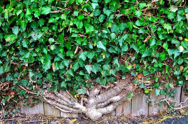 plantas para muros verdes plantas