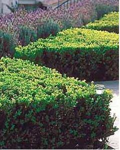 plantas seto